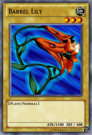 Barrel Lily